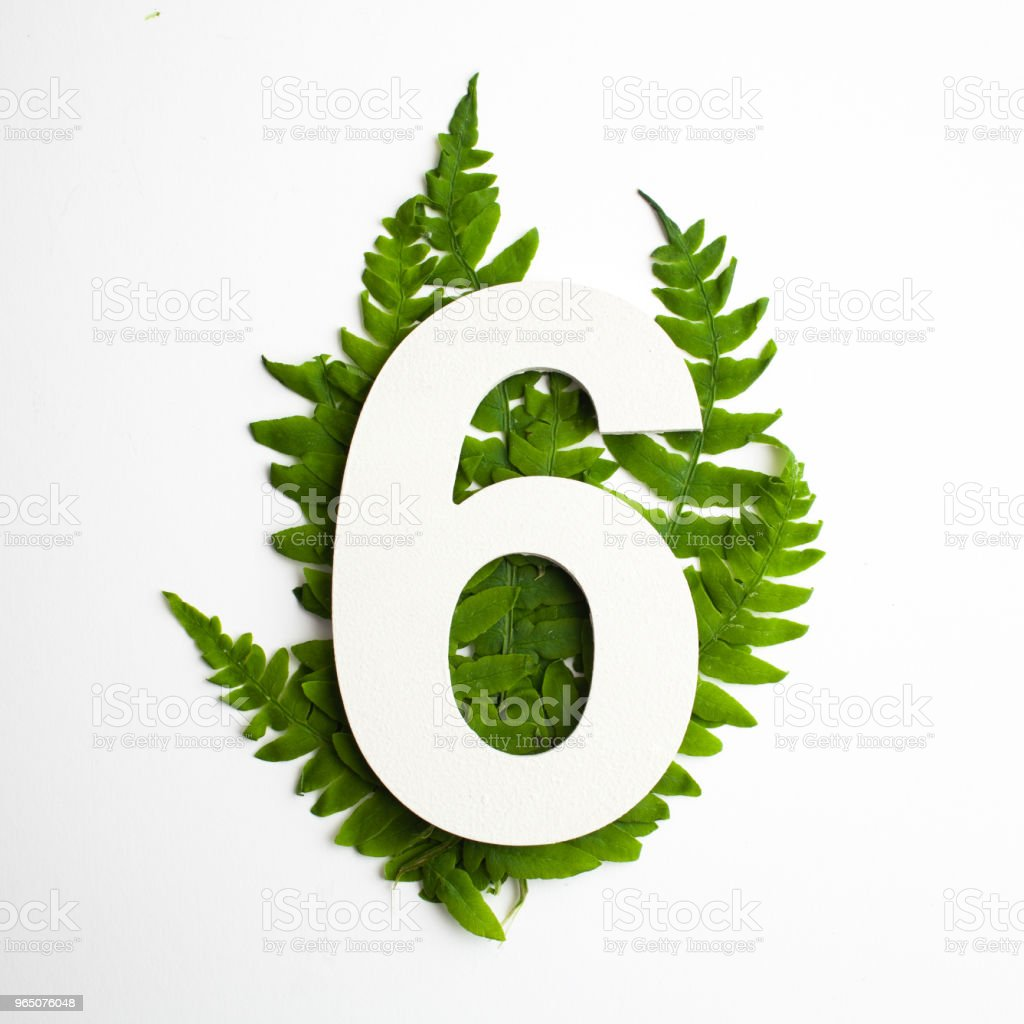 Floral number six. Beautiful green leaves and fern foliage numbers. royalty-free stock photo