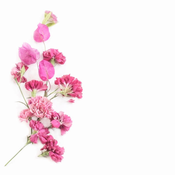Floral ornament in pink tones with place for text on white background picture id811448468?b=1&k=6&m=811448468&s=612x612&w=0&h=p9icz2pooujivktjupfqinalmncmuktjpaaszigp74y=