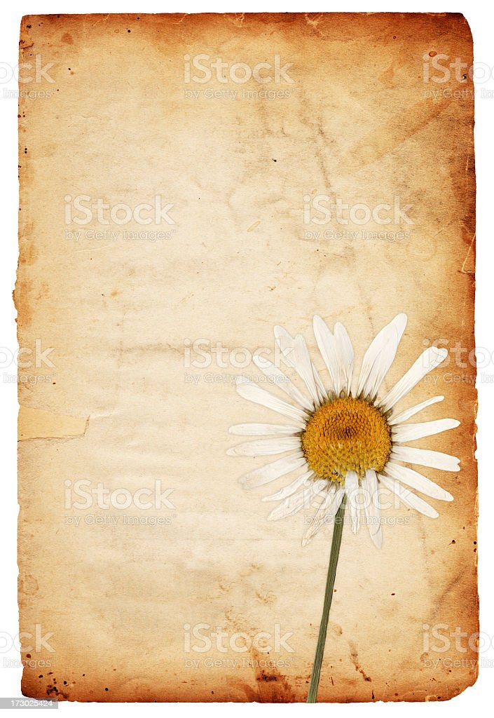 Floral Paper XXXL royalty-free stock photo