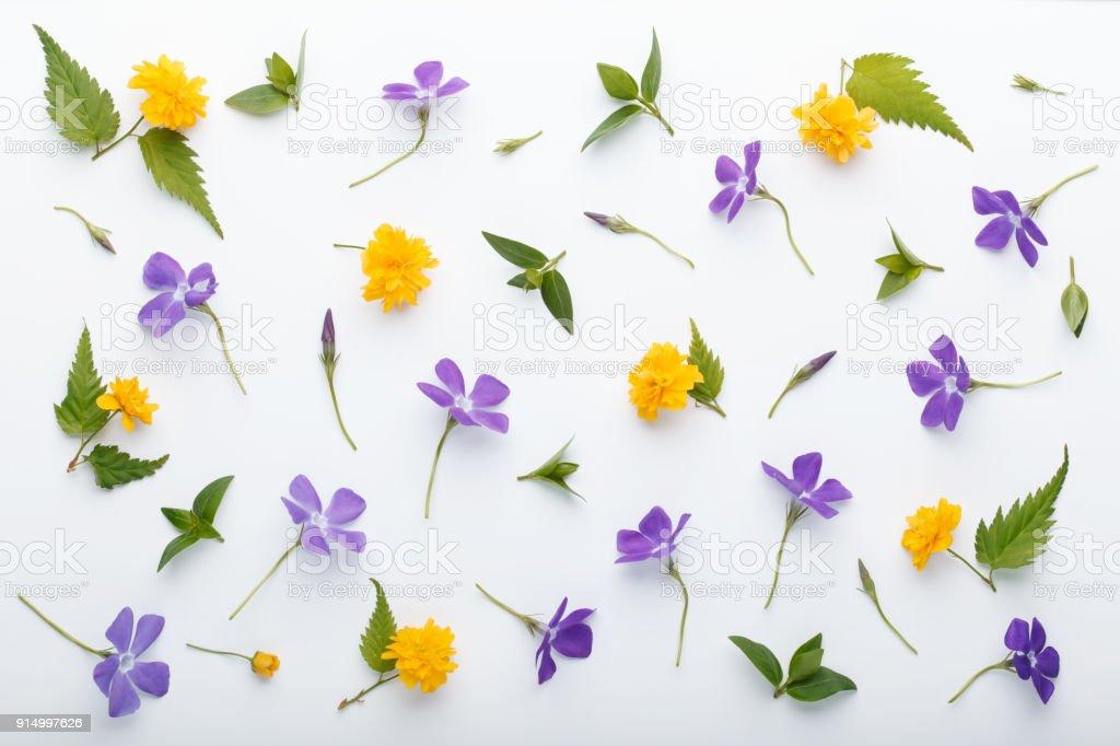 Fotografía de Flores De Flores De Primavera Colorida Y Hojas De ...