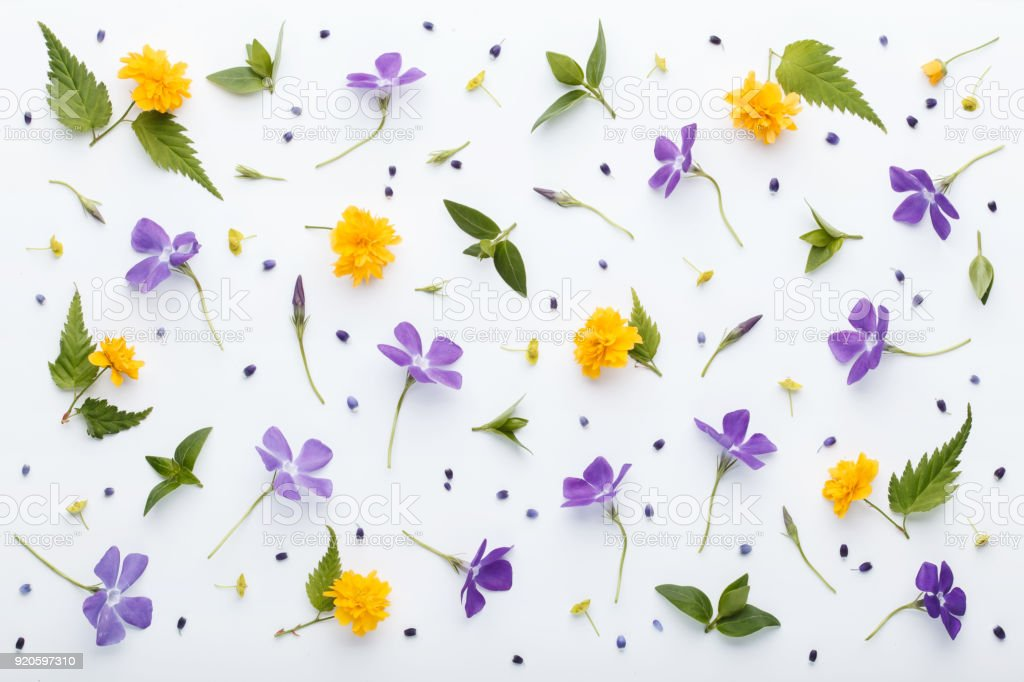 Flores De Flores De Primavera Colorida Y Hojas De Color Verde Sobre ...