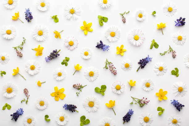 Floral pattern made of colorful spring flowers and green leaves on white background. stock photo
