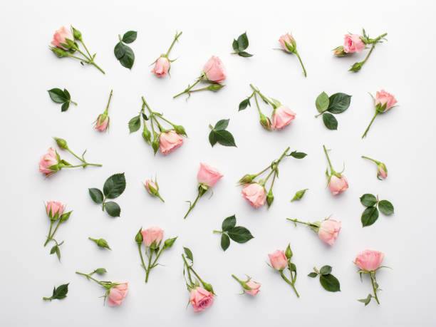 Floral pattern made of pink roses and green leaves on white background. stock photo