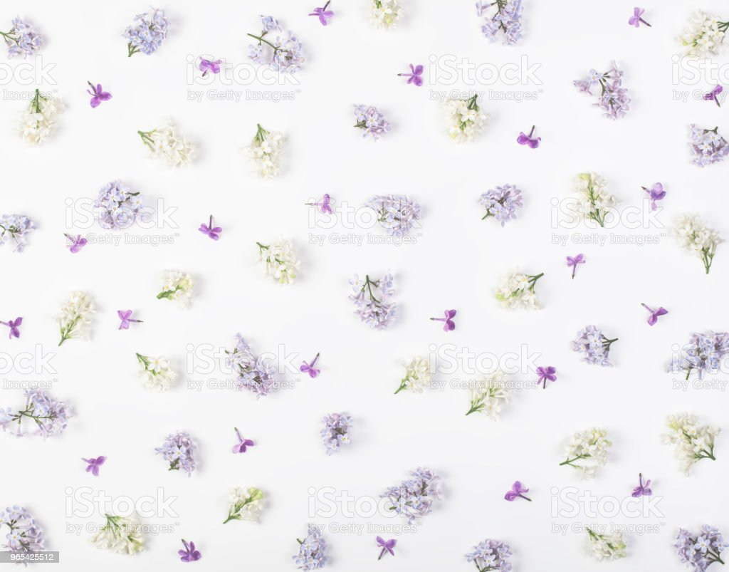 Floral pattern made of spring white and violet lilac flowers isolated on white background. Flat lay. Top view. zbiór zdjęć royalty-free