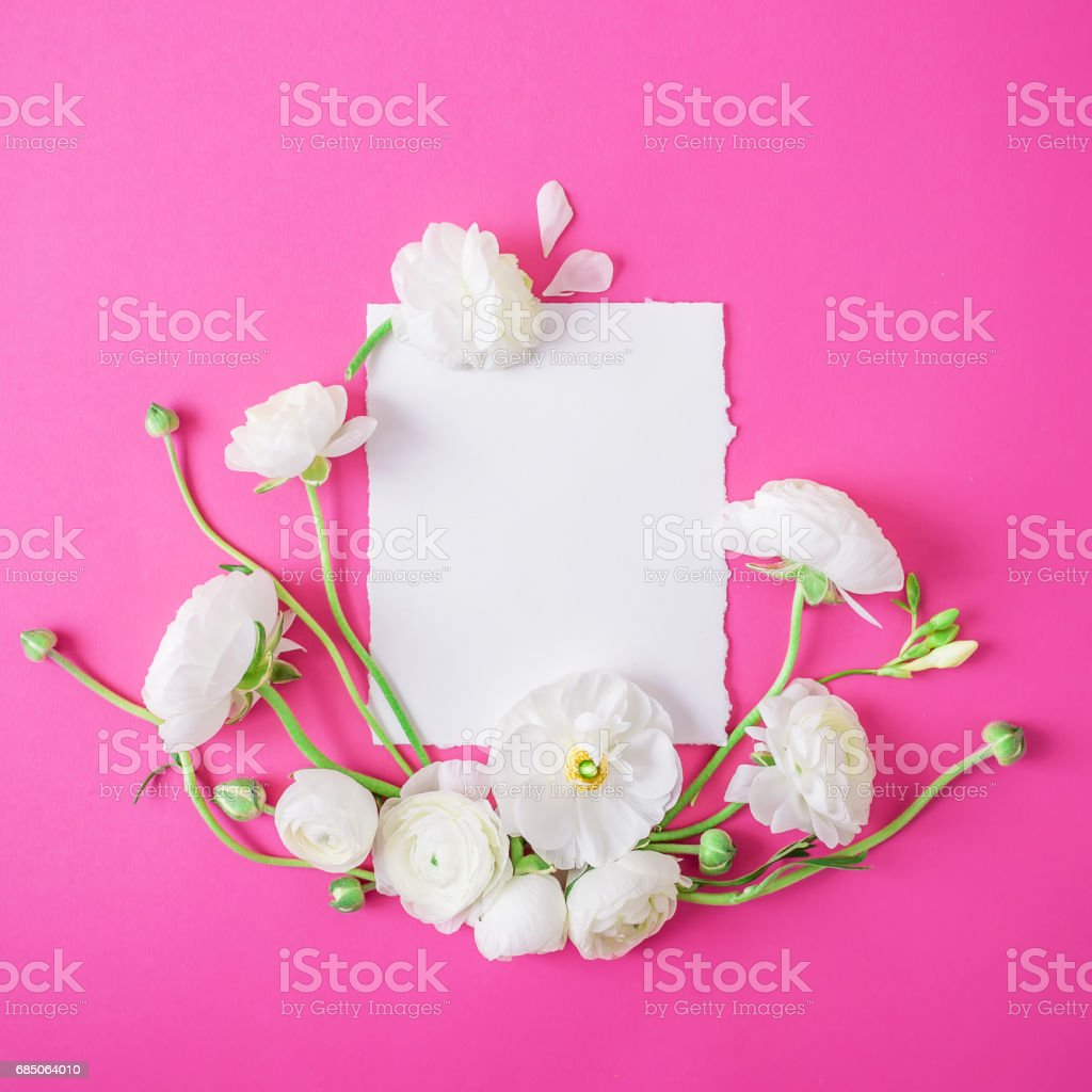 Floral pattern of white flowers and white card on pink background. Flat lay, top view. Background of ranunculus royalty-free stock photo