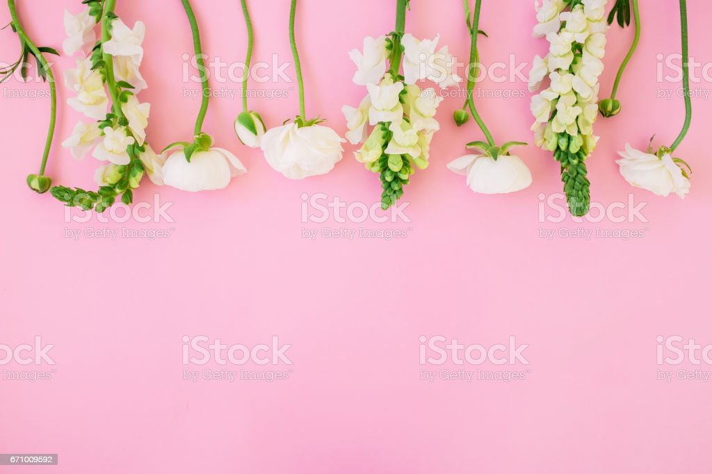 Floral pattern of white flowers - ranunculus and snapdragonon pink background. Flat lay, top view. Floral background. stock photo