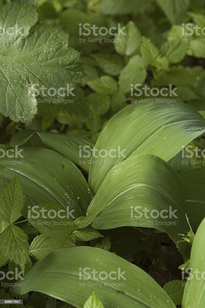 Diseño Floral foto de stock libre de derechos