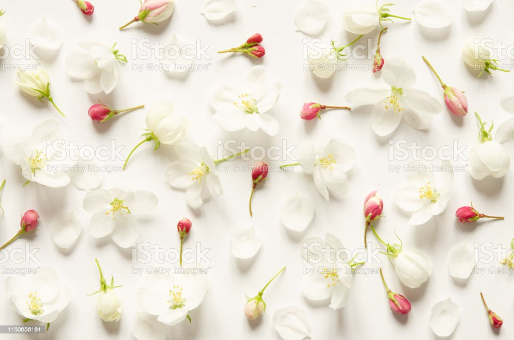 Floral pattern with pink and white flowers on white background. Flat...