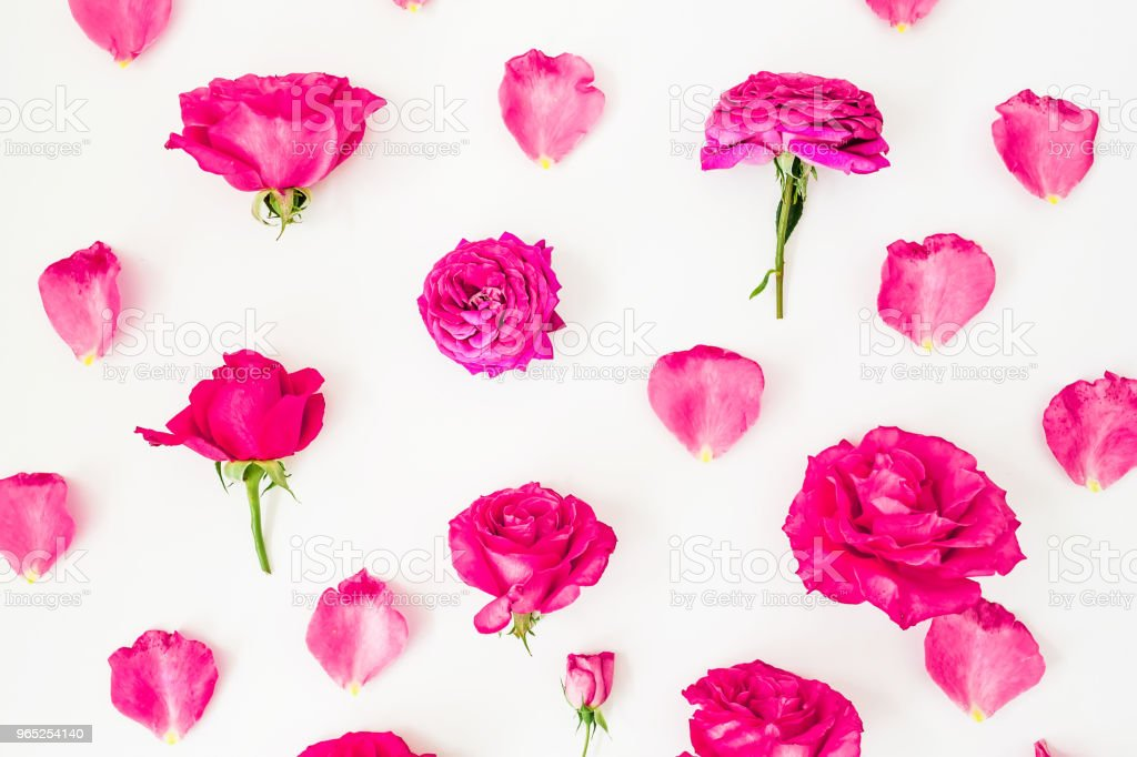 Floral pattern with pink rose flowers and petals on white background. Flat lay, Top view. Flowers texture. royalty-free stock photo
