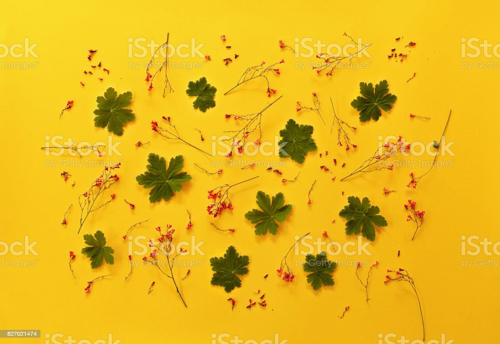 Floral pattern with red wildflowers, green leaves, petals on yellow background. Flat lay, top view. stock photo