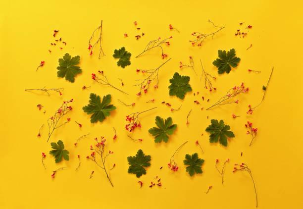 Hojas de patrón floral con flores rojas, verdes, pétalos sobre fondo amarillo. Vista plana endecha, superior. - foto de stock