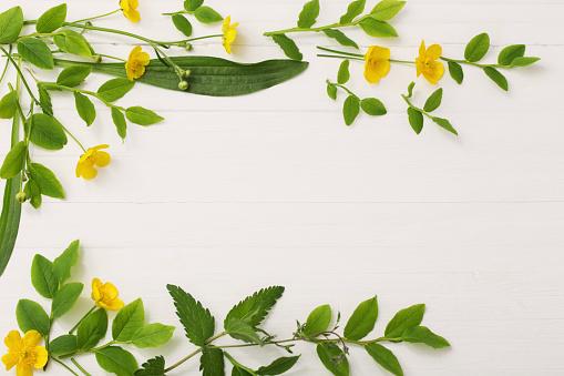 흰색 바탕에 노란색 미나리 아재 비 꽃 패턴 0명에 대한 스톡 사진 및 기타 이미지
