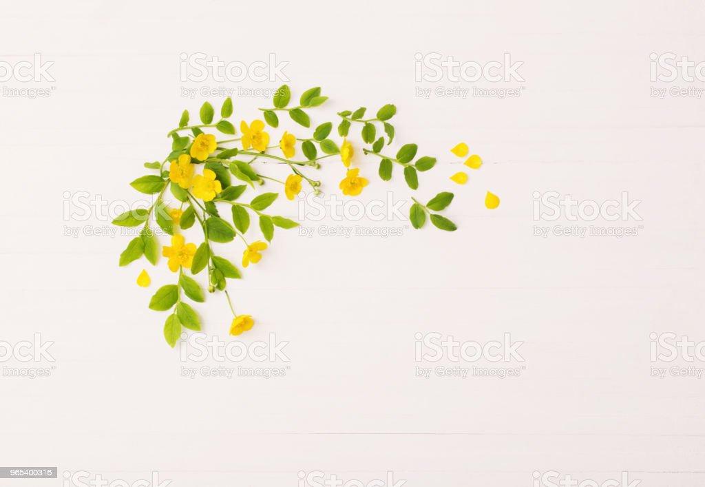 白色背景下黃色毛茛的花型圖案 - 免版稅具有特定質地圖庫照片