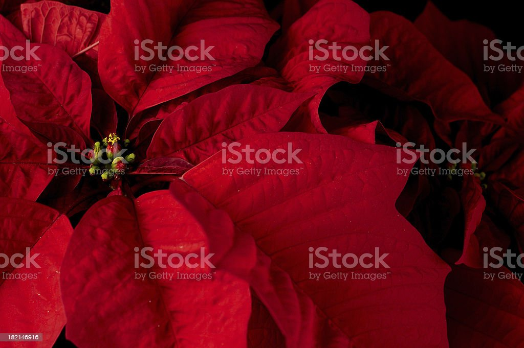 floral royalty-free stock photo