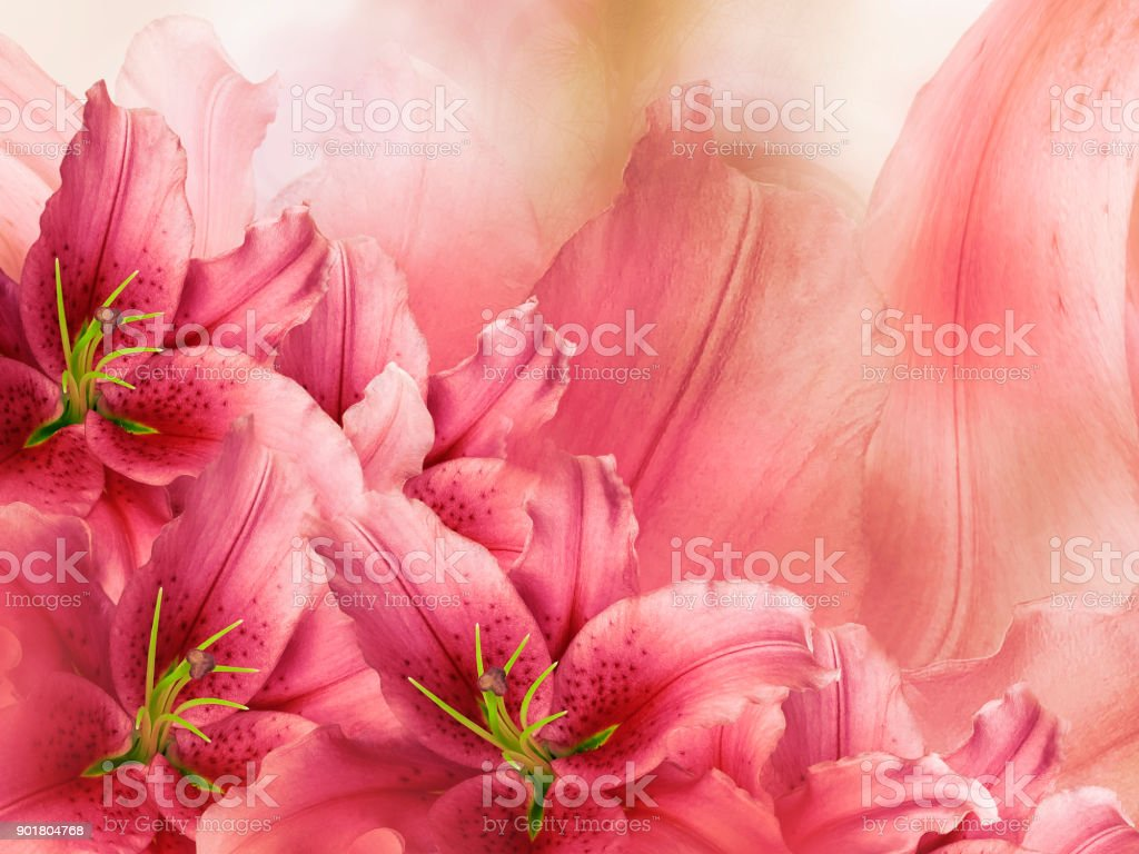 Floral Redpink Beautiful Background Flower Composition Of Lily