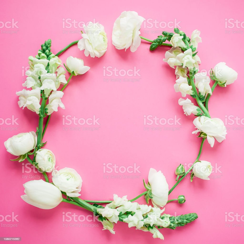Floral round frame of white flowers on pink background. Flat lay, top...