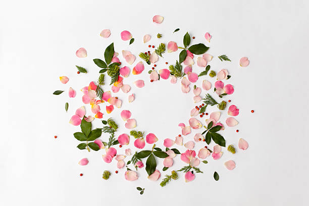 floral round frame with rose petals and leaves on white - flowers stock photos and pictures