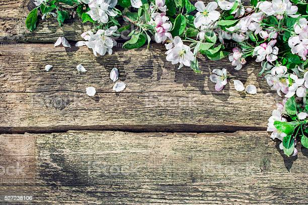 Floral spring background picture id527238106?b=1&k=6&m=527238106&s=612x612&h=tnxoooo089ezuk5anfhw 0yyr8kiif0cozqa7o47n5c=