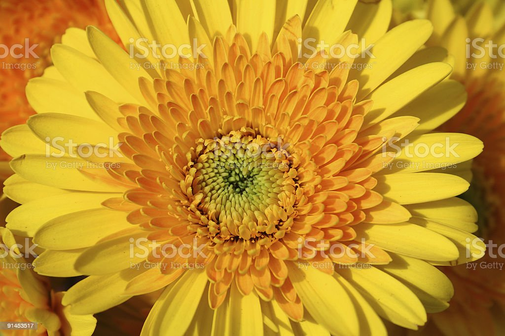 Floral sunshine royalty-free stock photo