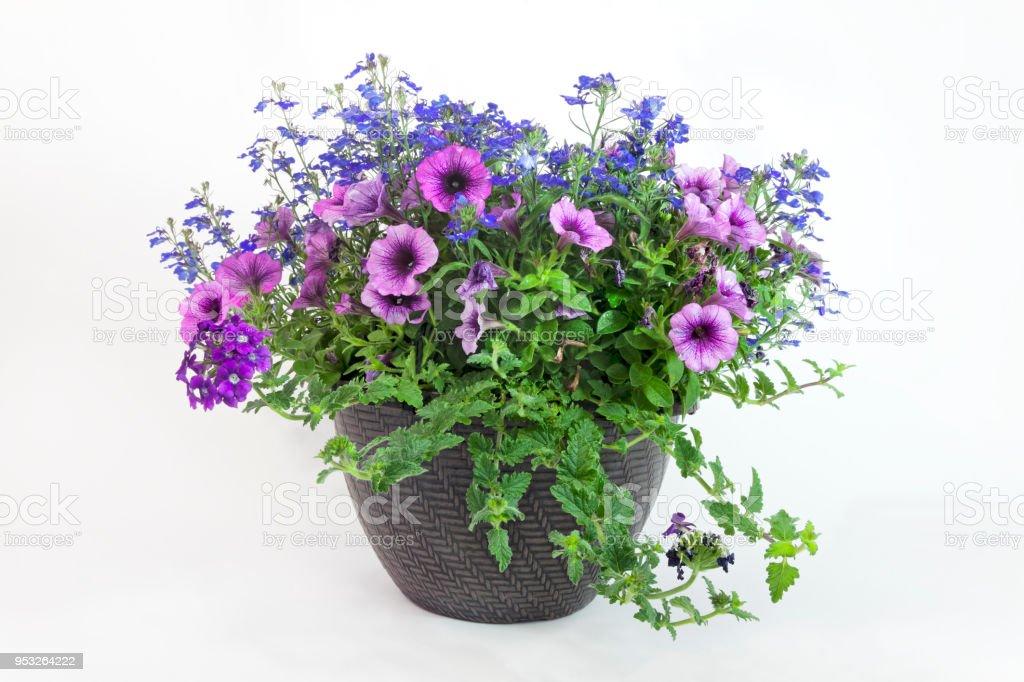Floral Triple Threat Planter royalty-free stock photo