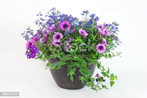 Spring planter with lobelia, verbenas and petunias.