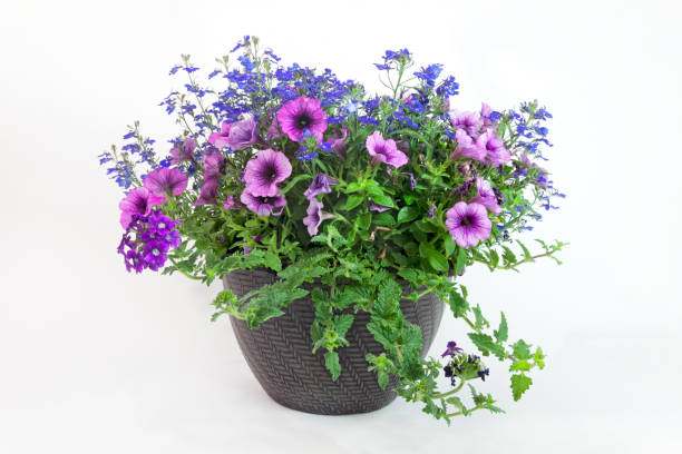 Floral Triple Threat Planter stock photo