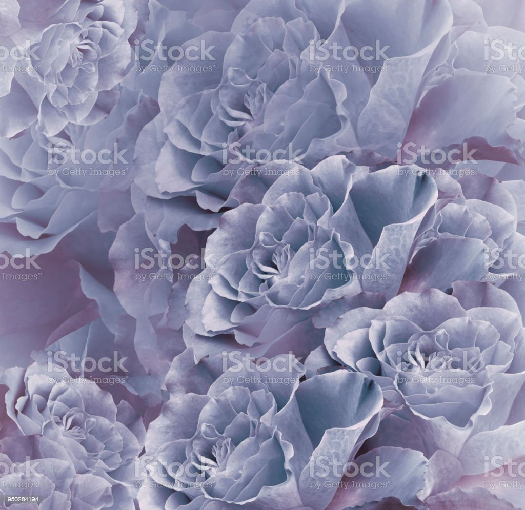 Floral vintage bluepink beautiful background flower composition floral vintage blue pink beautiful background flower composition bouquet of flowers from blue izmirmasajfo