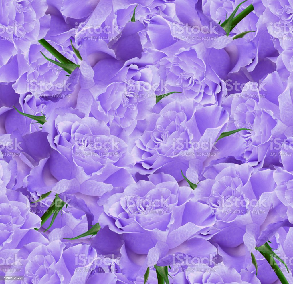 Floral Violet Beautiful Background Flower Composition Bouquet Of