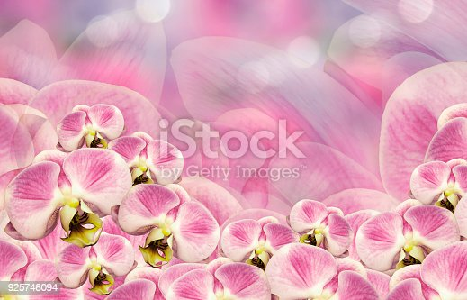 Floral white-pink  background. Bouquet  of  orchids.  Flowers phalaenopsis on a pink-white background bokeh. Greeting card.  Nature.