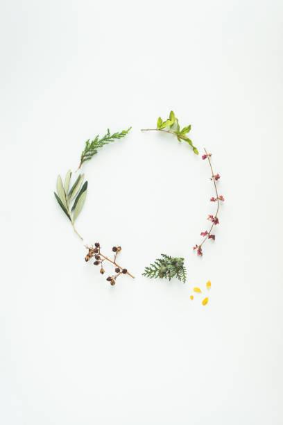 floral winter wreath - ramoscello d'ulivo foto e immagini stock