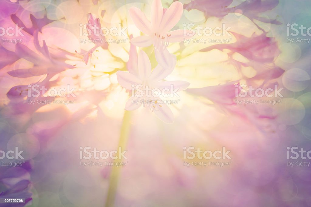 Floral with defocused background stock photo