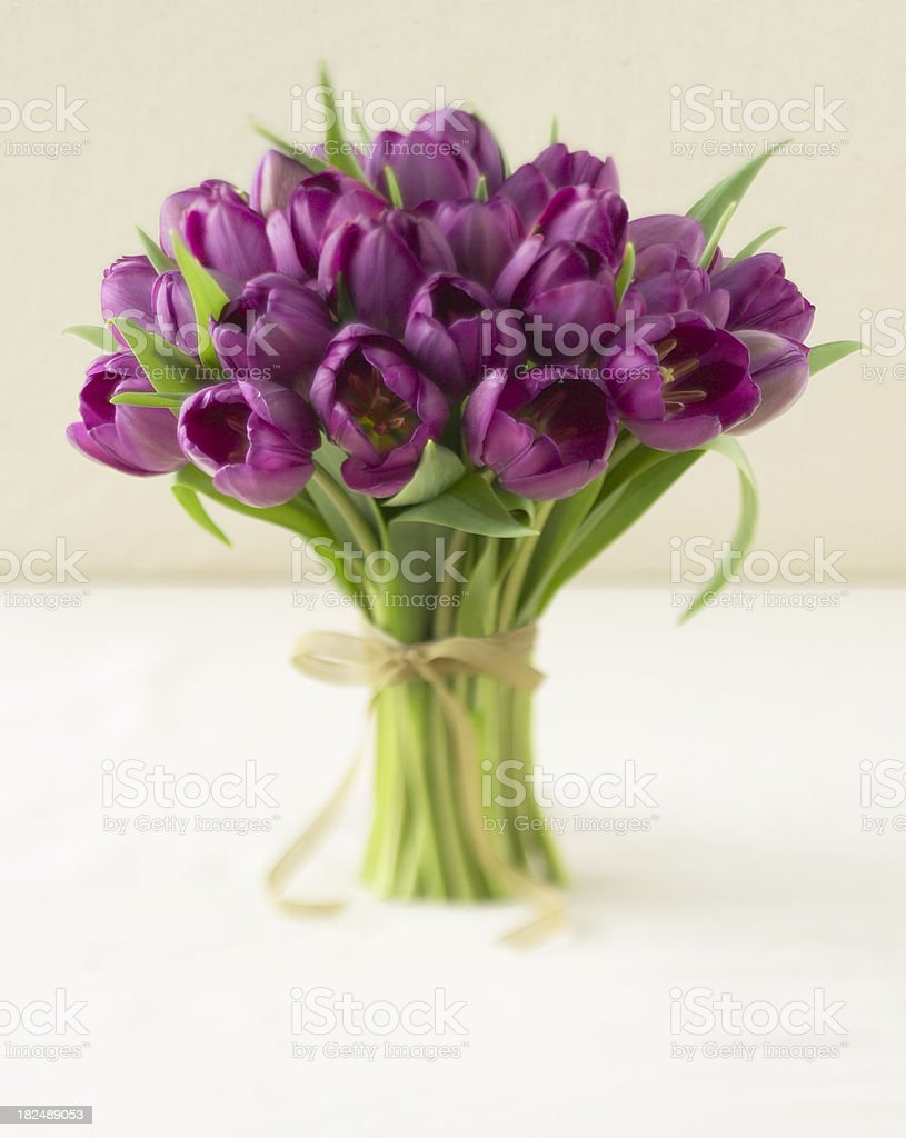 Floral-Tulips royalty-free stock photo