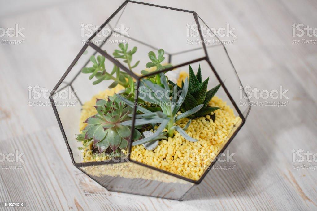 Florarium Glass vase with succulent plant. Miniature cactus   in a stock photo