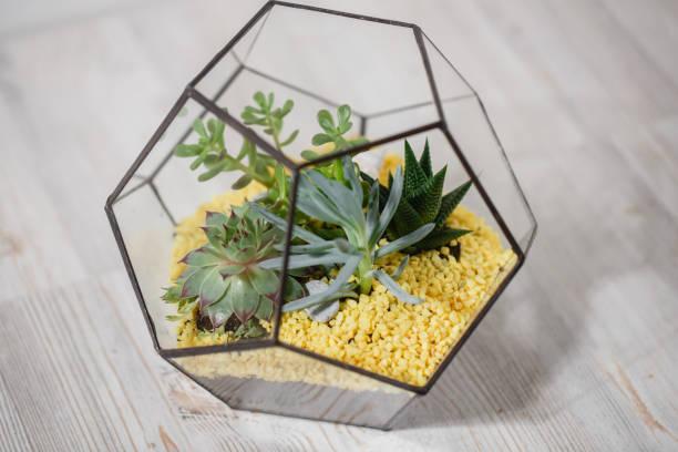 florarium glass vase mit sukkulente. miniatur-kaktus in ein - vase glas stock-fotos und bilder