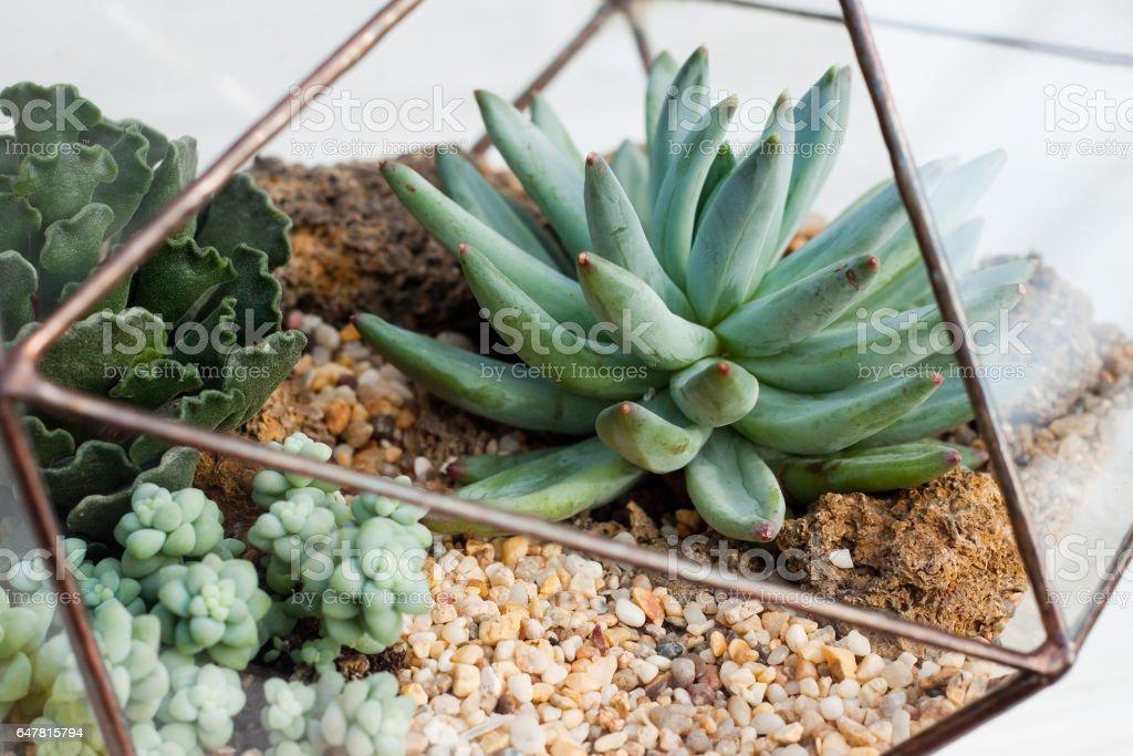 Florarium with succulents stock photo