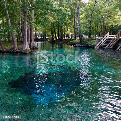 Florida springs fresh water clear blue swim summer spring hot