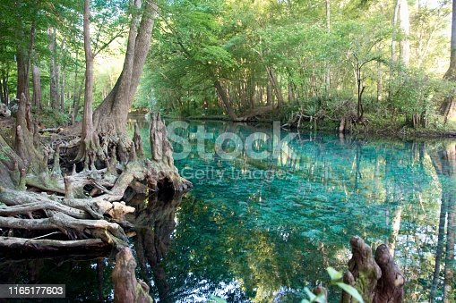 Florida springs fresh water clear blue swim summer spring hot