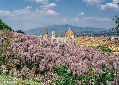 Cityscape of Florence covered in wisteria in springtime