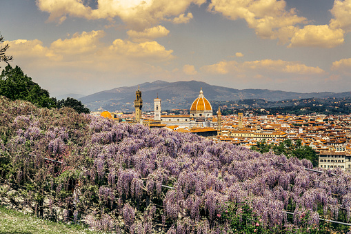 Florence cityscape in spring