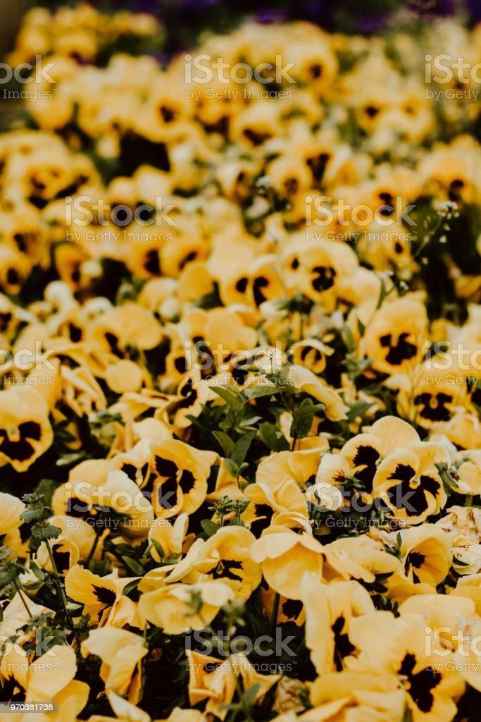 Flores amarillas - foto de stock