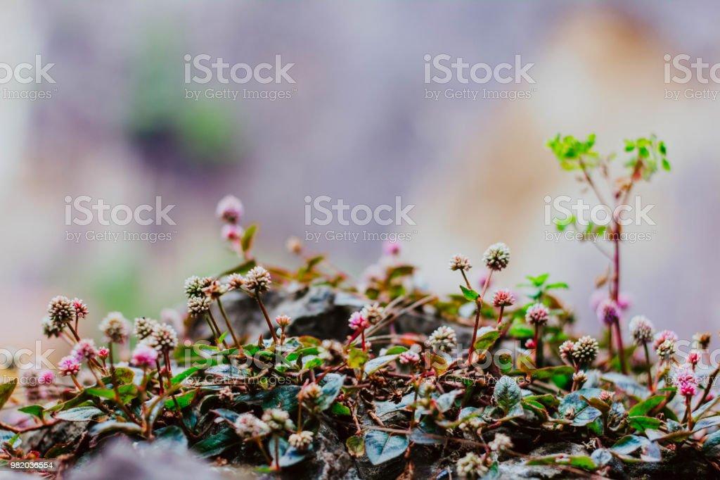 Flores de Bosque - foto de stock