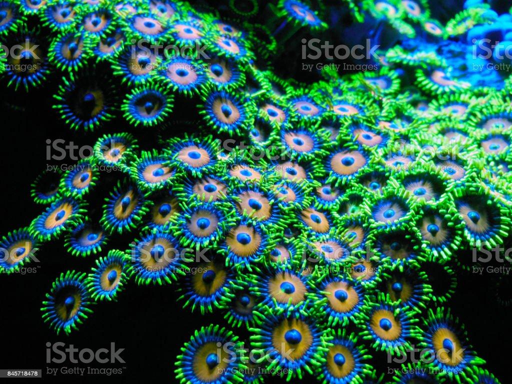 Florescent Coral stock photo
