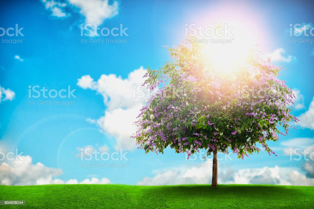 floribunda tree on blue sky background stock photo