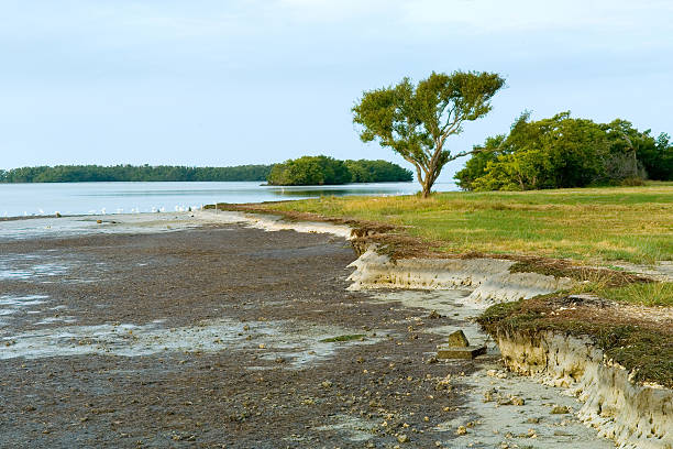 florida bay at low tide in morning stock photo