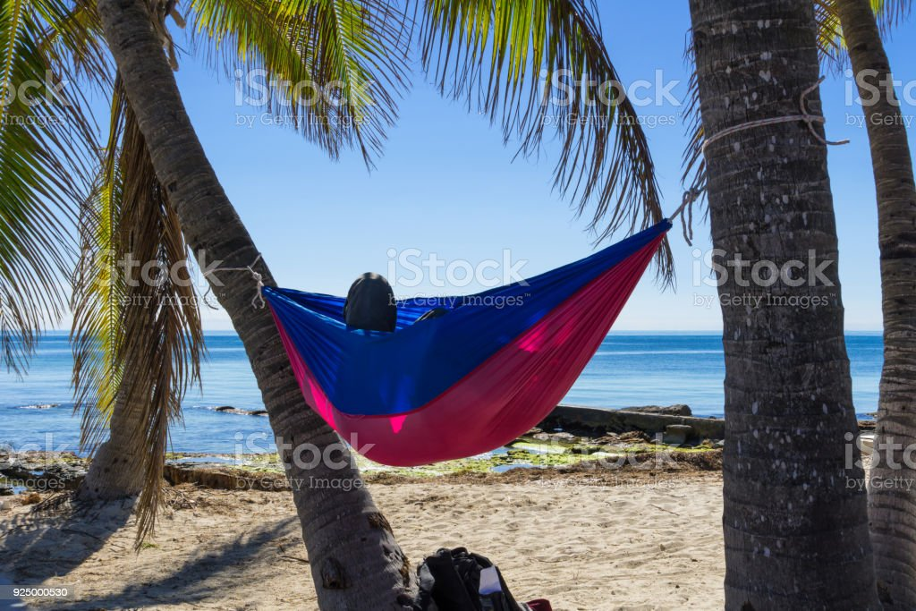 usa florida colorful hammock hanging between palm tree trunks at