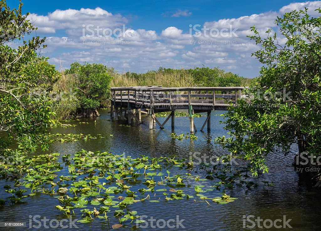 Florida Everglades Boardwalk stock photo
