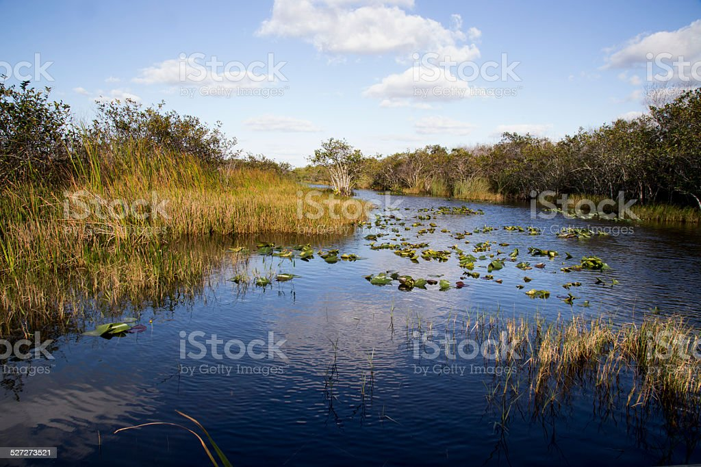 Florida Everglades stock photo