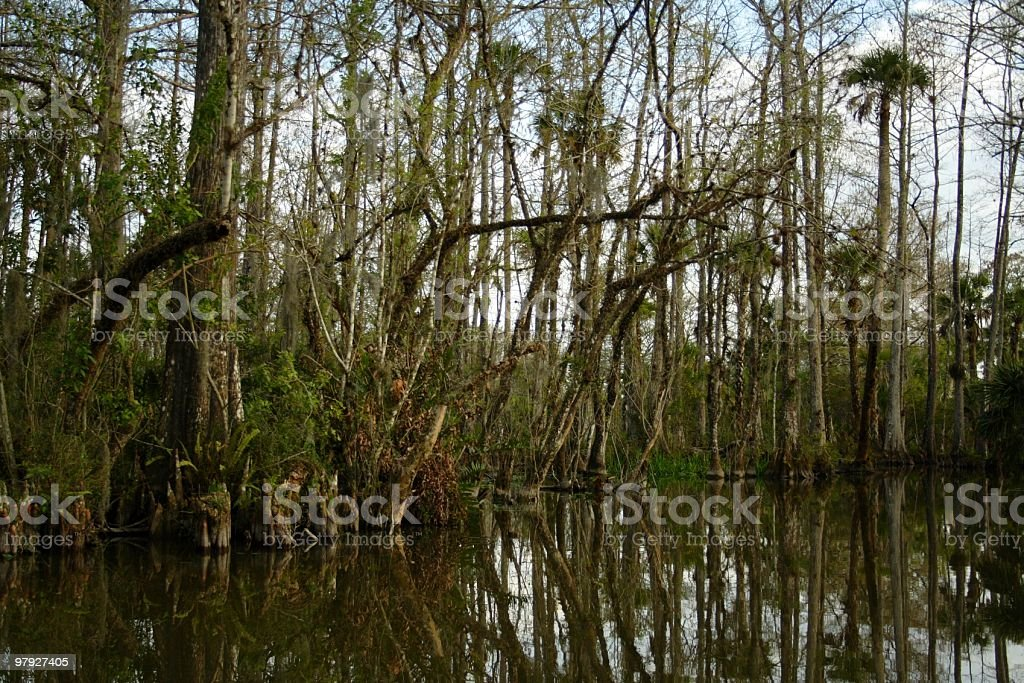 Florida Everglades royalty-free stock photo