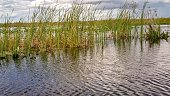 Picture from the water of the Florida everglades.  Reflection can be seen within the waters.