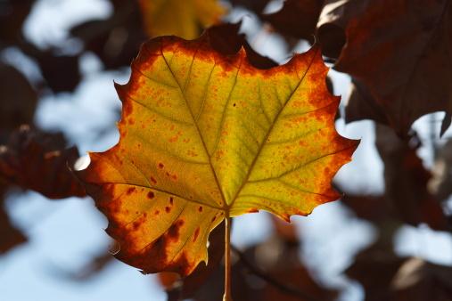 Florida Fall Foliage Stock Photo - Download Image Now